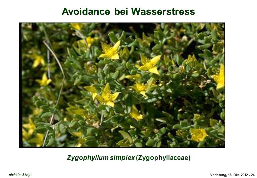 Vorlesung, 18. Okt. 2012 - 24 Avoidance bei Wasserstress Zygophyllum simplex (Zygophyllaceae) Avoidance: Zygophyllum simplex nicht im Skript