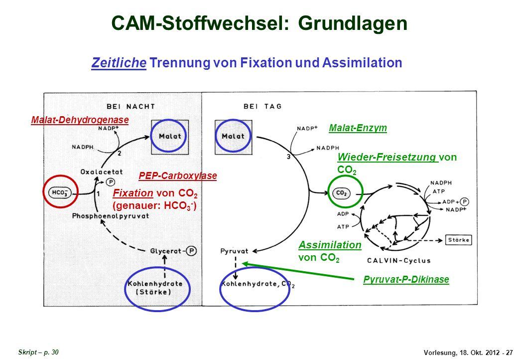 Vorlesung, 18. Okt. 2012 - 27 CAM-Stoffwechsel: Grundlagen Zeitliche Trennung von Fixation und Assimilation Fixation von CO 2 (genauer: HCO 3 - ) Assi