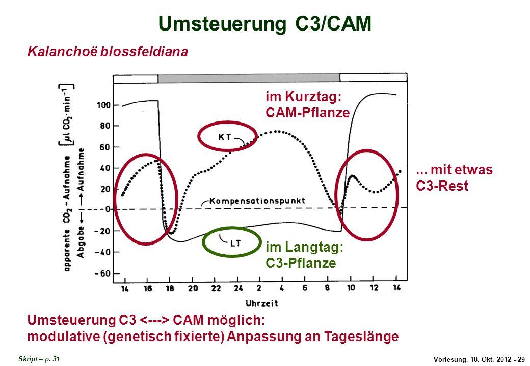 Vorlesung, 18. Okt. 2012 - 29 Umsteuerung C3/CAM Kalanchoë blossfeldiana im Langtag: C3-Pflanze im Kurztag: CAM-Pflanze... mit etwas C3-Rest Umsteueru