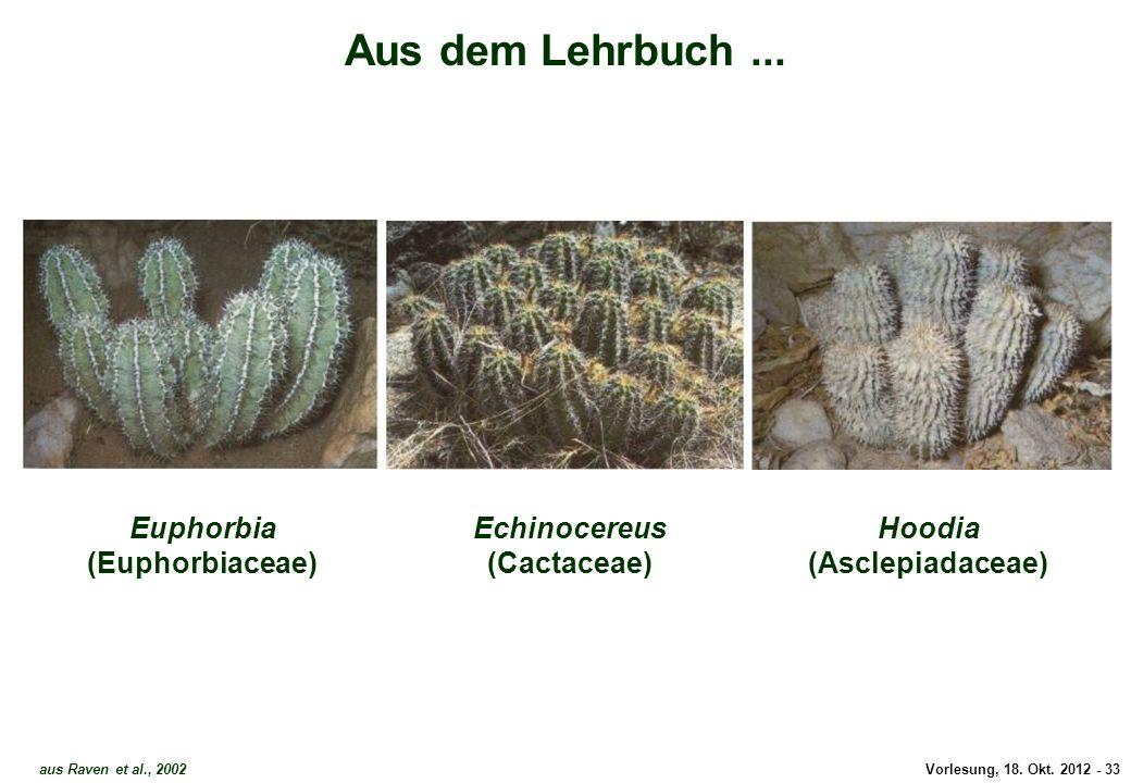Vorlesung, 18. Okt. 2012 - 33 aus Raven et al., 2002 Euphorbia (Euphorbiaceae) Echinocereus (Cactaceae) Aus dem Lehrbuch... Hoodia (Asclepiadaceae) Au