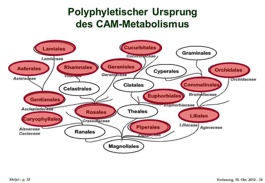 Vorlesung, 18. Okt. 2012 - 34 Polyphyletischer Ursprung des CAM-Metabolismus Polyphyletischer Ursprung CAM Skript – p. 32