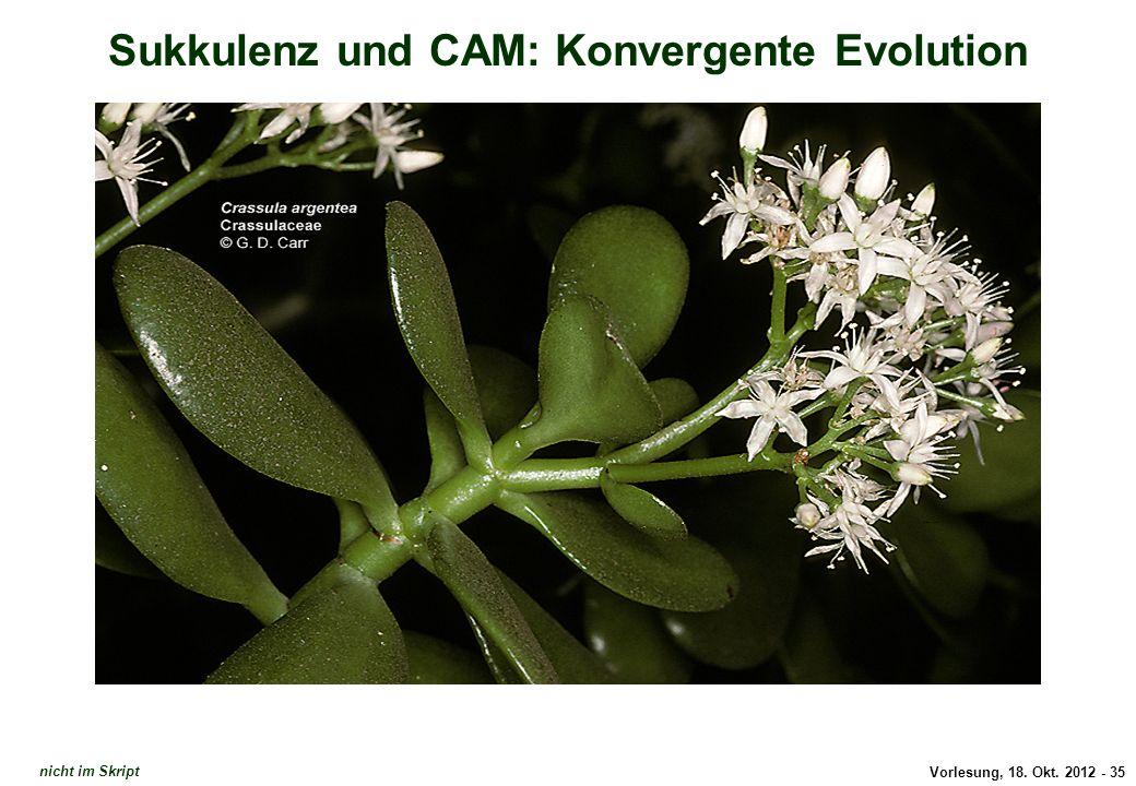 Vorlesung, 18. Okt. 2012 - 35 Sukkulenz und CAM: Konvergente Evolution Crassula argentea nicht im Skript