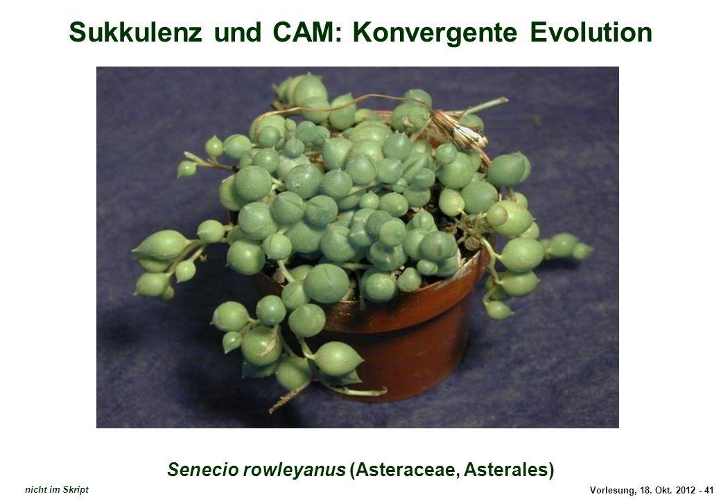 Vorlesung, 18. Okt. 2012 - 41 Sukkulenz und CAM: Konvergente Evolution Senecio rowleyanus (Asteraceae, Asterales) Senecio rowleyanus nicht im Skript
