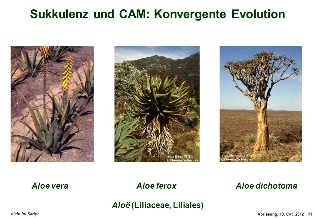 Vorlesung, 18. Okt. 2012 - 44 Sukkulenz und CAM: Konvergente Evolution Aloë (Liliaceae, Liliales) Aloe veraAloe dichotomaAloe ferox Aloe nicht im Skri