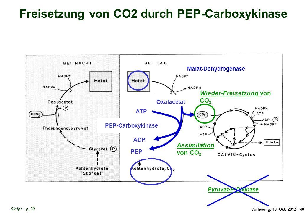 Vorlesung, 18. Okt. 2012 - 48 Freisetzung von CO2 durch PEP-Carboxykinase Assimilation von CO 2 Wieder-Freisetzung von CO 2 Pyruvat-P-Dikinase Oxalace
