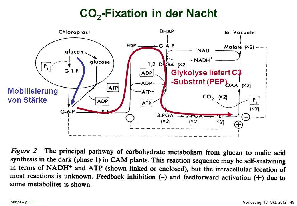 Vorlesung, 18. Okt. 2012 - 49 CO 2 -Fixation in der Nacht Mobilisierung von Stärke Glykolyse liefert C3 -Substrat (PEP) CO2-Fixation in der Nacht Skri