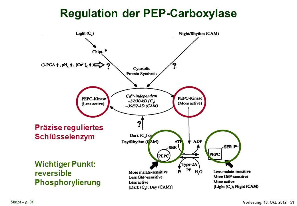 Vorlesung, 18. Okt. 2012 - 51 Regulation der PEP-Carboxylase Präzise reguliertes Schlüsselenzym Wichtiger Punkt: reversible Phosphorylierung Regulatio