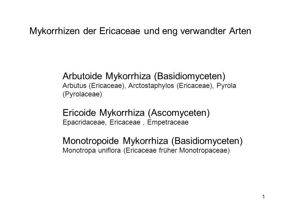 1 Mykorrhizen der Ericaceae und eng verwandter Arten Arbutoide Mykorrhiza (Basidiomyceten) Arbutus (Ericaceae), Arctostaphylos (Ericaceae), Pyrola (Py