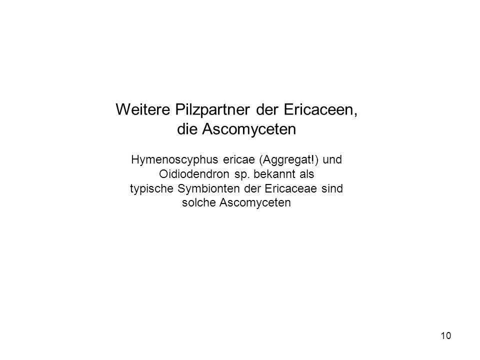 10 Weitere Pilzpartner der Ericaceen, die Ascomyceten Hymenoscyphus ericae (Aggregat!) und Oidiodendron sp. bekannt als typische Symbionten der Ericac