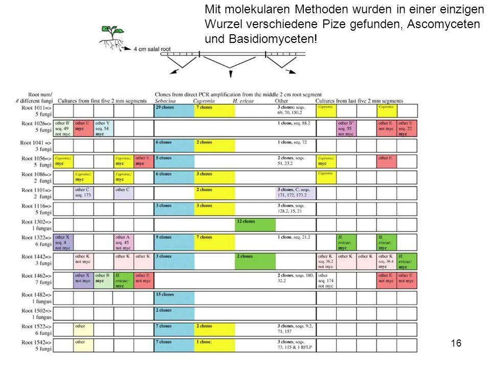 16 Mit molekularen Methoden wurden in einer einzigen Wurzel verschiedene Pize gefunden, Ascomyceten und Basidiomyceten!