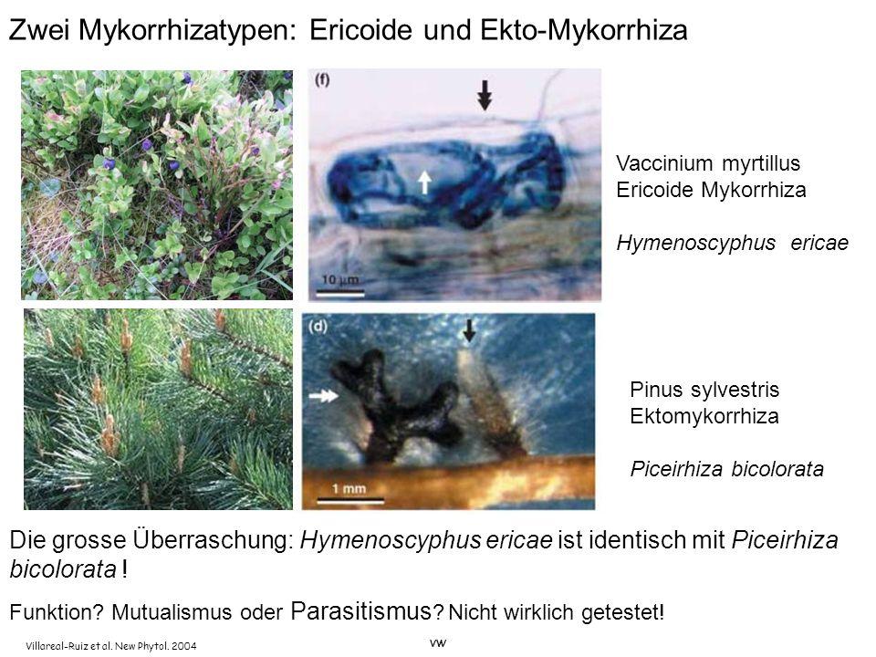 Zwei Mykorrhizatypen: Ericoide und Ekto-Mykorrhiza Funktion? Mutualismus oder Parasitismus ? Nicht wirklich getestet! Villareal-Ruiz et al. New Phytol