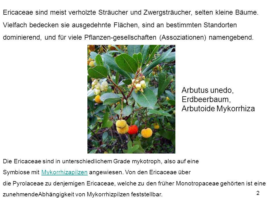 2 Ericaceae sind meist verholzte Sträucher und Zwergsträucher, selten kleine Bäume. Vielfach bedecken sie ausgedehnte Flächen, sind an bestimmten Stan