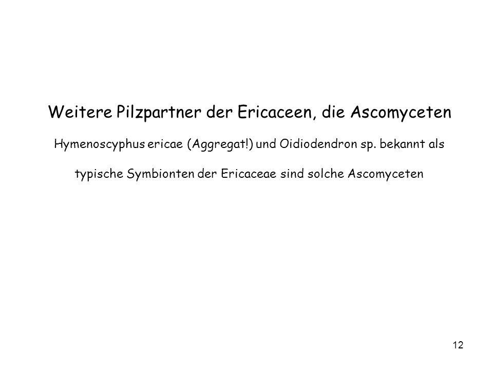 12 Weitere Pilzpartner der Ericaceen, die Ascomyceten Hymenoscyphus ericae (Aggregat!) und Oidiodendron sp. bekannt als typische Symbionten der Ericac