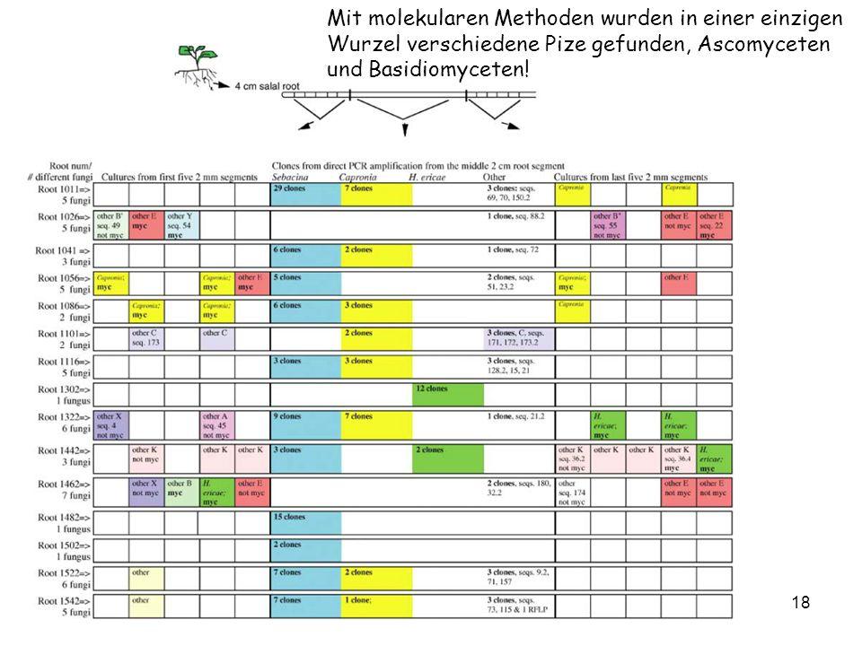 18 Mit molekularen Methoden wurden in einer einzigen Wurzel verschiedene Pize gefunden, Ascomyceten und Basidiomyceten!