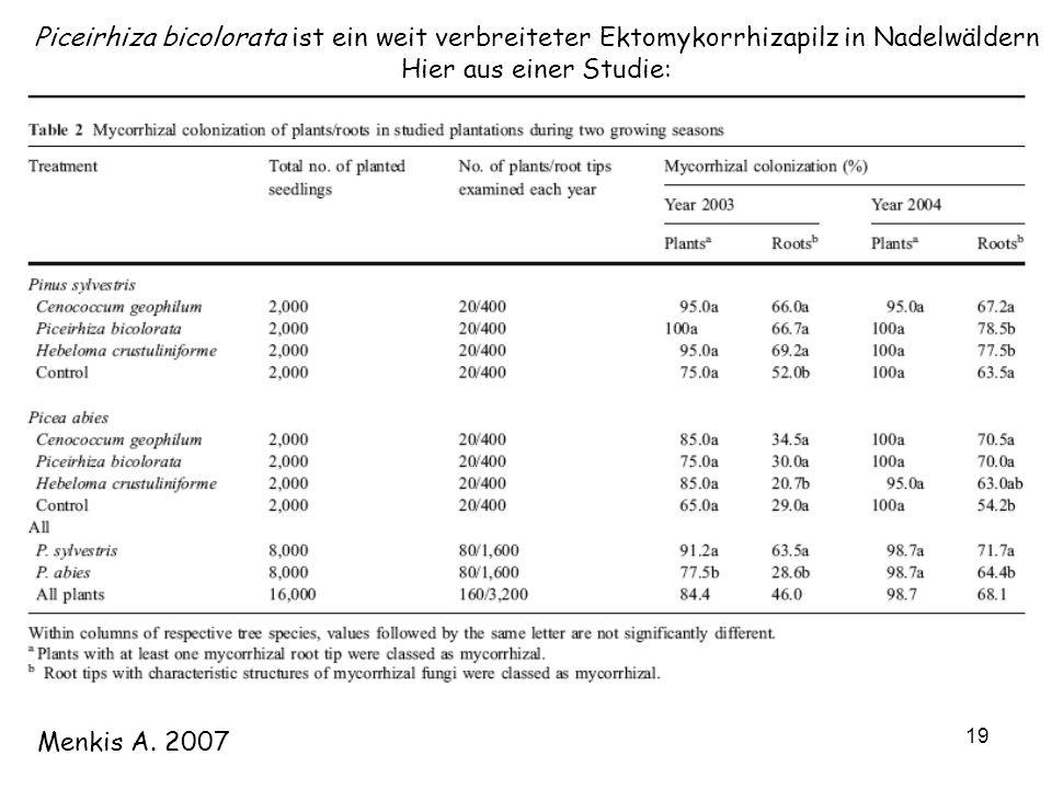 19 Menkis A. 2007 Piceirhiza bicolorata ist ein weit verbreiteter Ektomykorrhizapilz in Nadelwäldern Hier aus einer Studie: