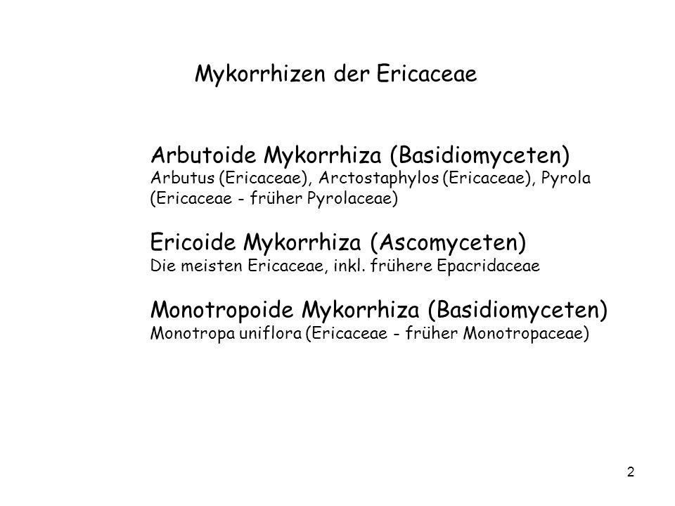 2 Mykorrhizen der Ericaceae Arbutoide Mykorrhiza (Basidiomyceten) Arbutus (Ericaceae), Arctostaphylos (Ericaceae), Pyrola (Ericaceae - früher Pyrolaceae) Ericoide Mykorrhiza (Ascomyceten) Die meisten Ericaceae, inkl.