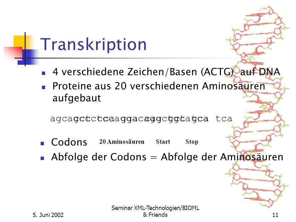 5. Juni 2002 Seminar XML-Technologien/BIOML & Friends11 Transkription 4 verschiedene Zeichen/Basen (ACTG) auf DNA Proteine aus 20 verschiedenen Aminos