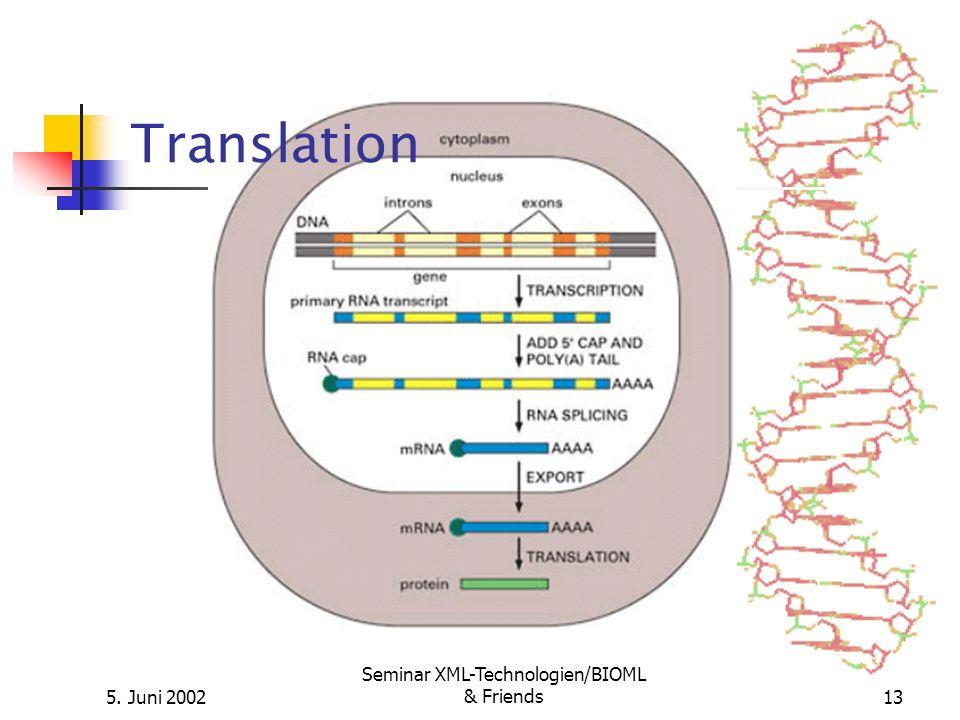 5. Juni 2002 Seminar XML-Technologien/BIOML & Friends13 Translation