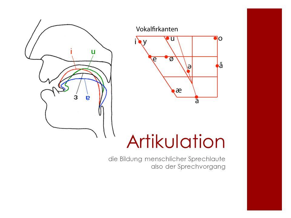 Artikulation die Bildung menschlicher Sprechlaute also der Sprechvorgang