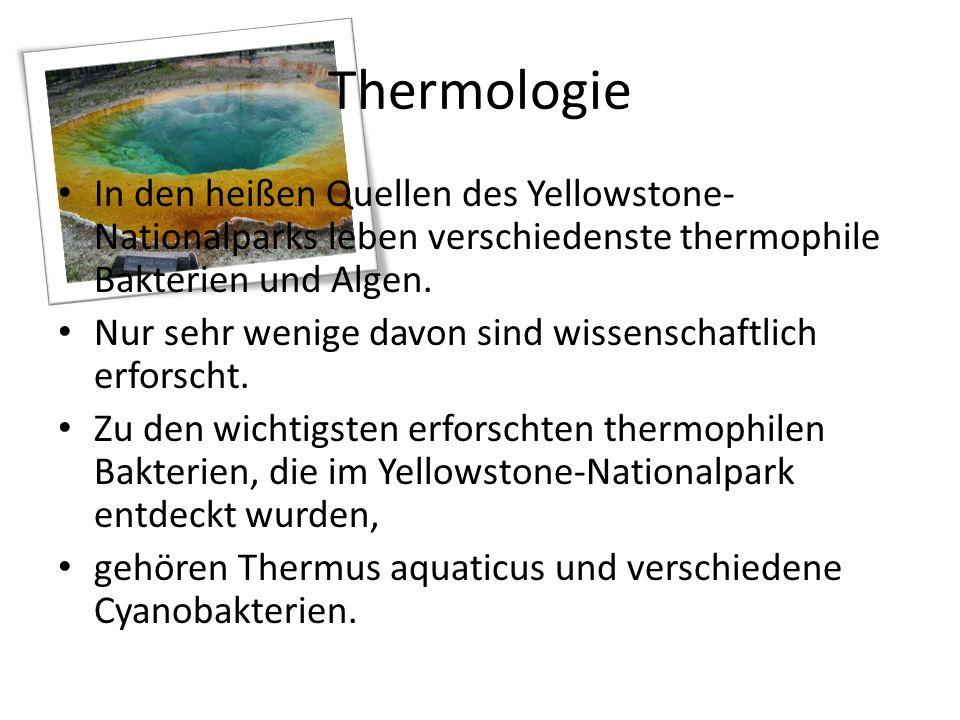 Thermologie In den heißen Quellen des Yellowstone- Nationalparks leben verschiedenste thermophile Bakterien und Algen. Nur sehr wenige davon sind wiss