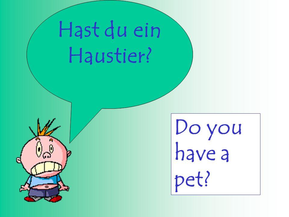 Hast du ein Haustier? Do you have a pet?