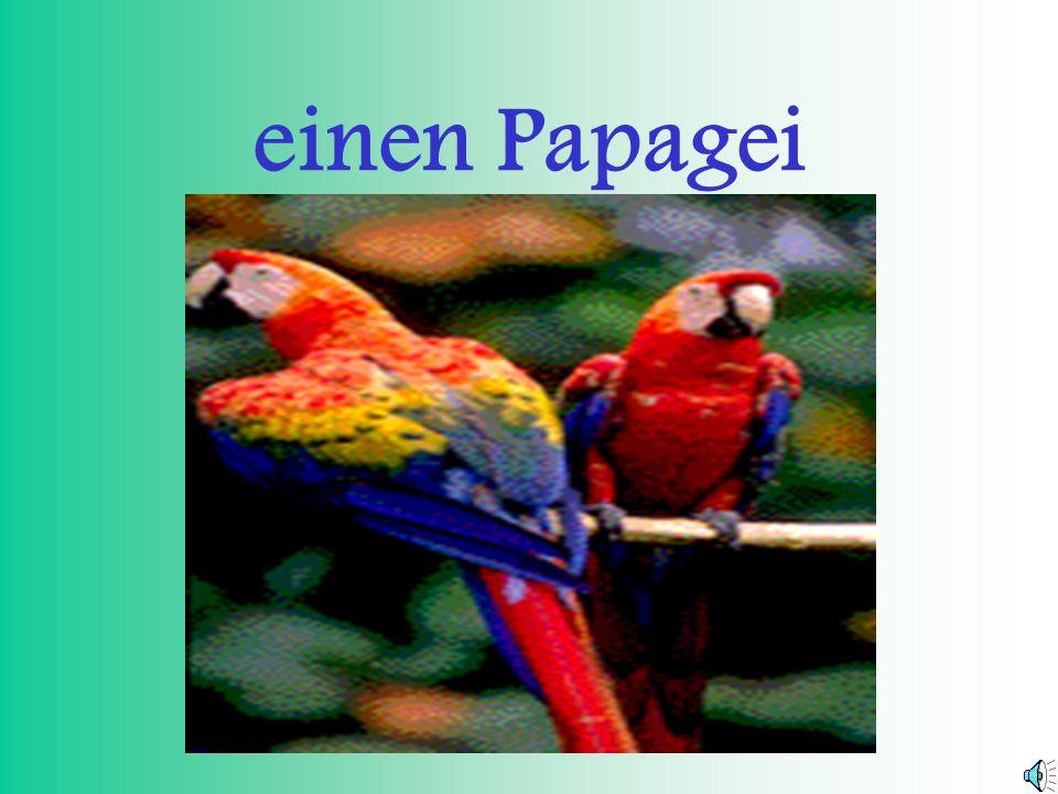 einen Papagei