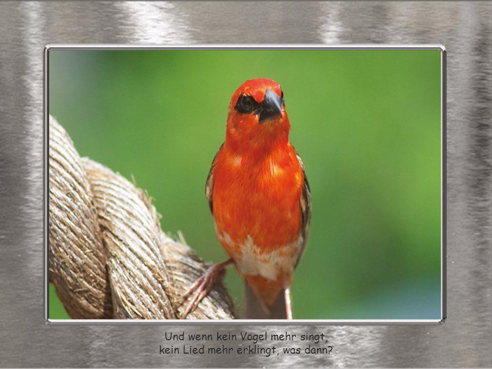 Und wenn kein Vogel mehr singt, kein Lied mehr erklingt, was dann?