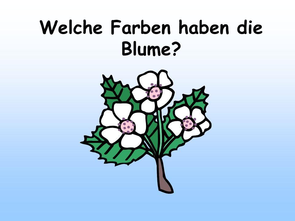 Welche Farben haben die Blume?