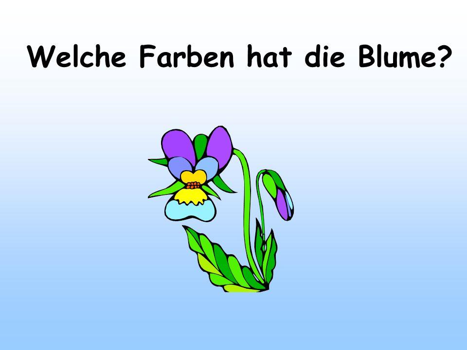 Welche Farben hat die Blume?
