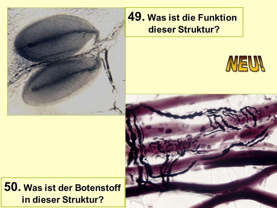 49. Was ist die Funktion dieser Struktur? 50. Was ist der Botenstoff in dieser Struktur?