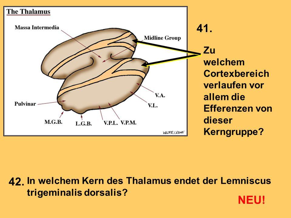 Zu welchem Cortexbereich verlaufen vor allem die Efferenzen von dieser Kerngruppe? In welchem Kern des Thalamus endet der Lemniscus trigeminalis dorsa