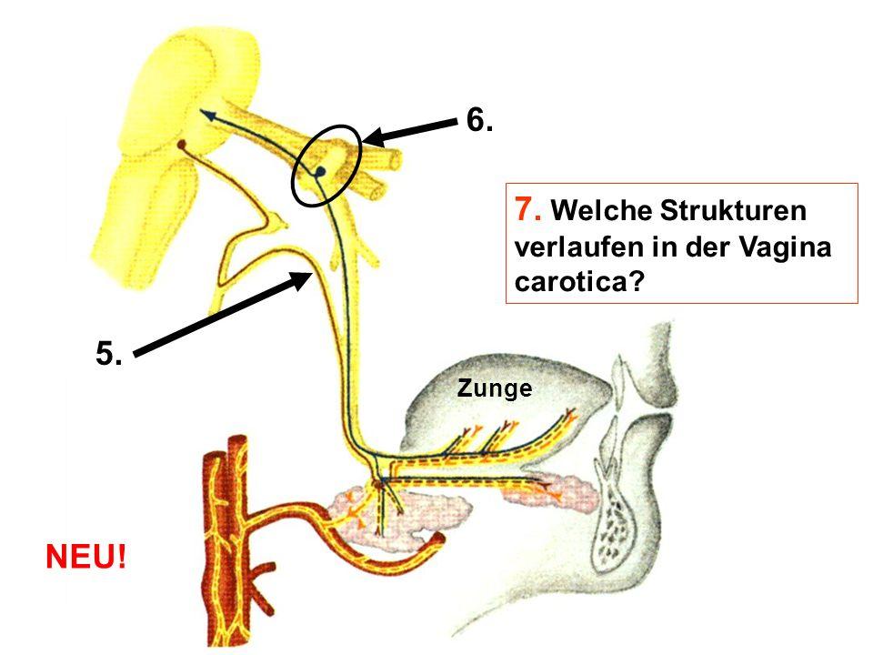 5. 6. 7. Welche Strukturen verlaufen in der Vagina carotica? Zunge NEU!