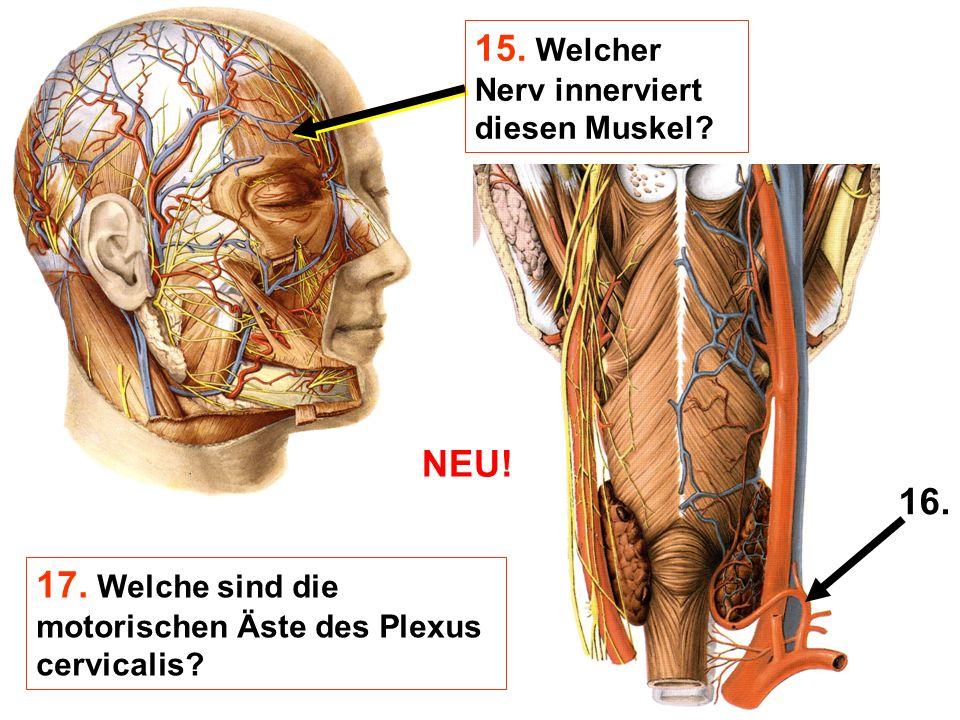 15. Welcher Nerv innerviert diesen Muskel? 16. 17. Welche sind die motorischen Äste des Plexus cervicalis? NEU!