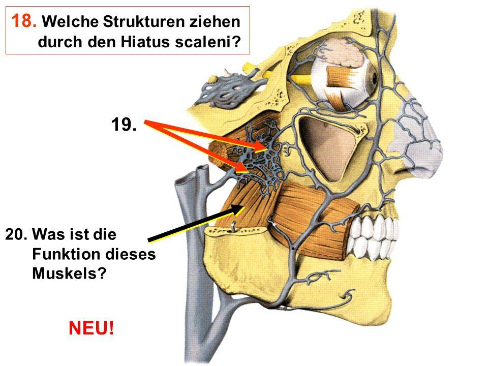 20. Was ist die Funktion dieses Muskels? 19. 18. Welche Strukturen ziehen durch den Hiatus scaleni? NEU!