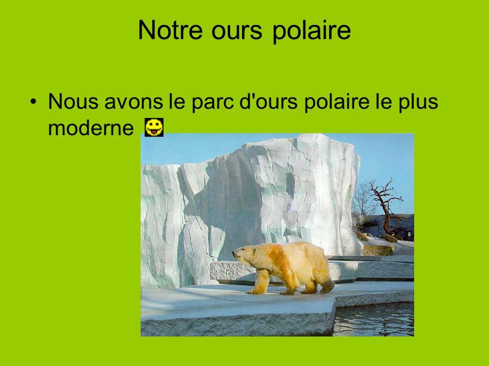 Notre ours polaire Nous avons le parc d'ours polaire le plus moderne