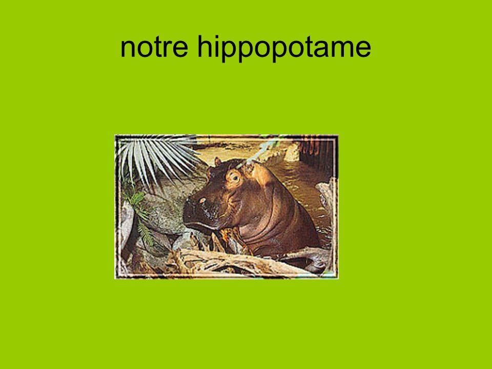 notre hippopotame