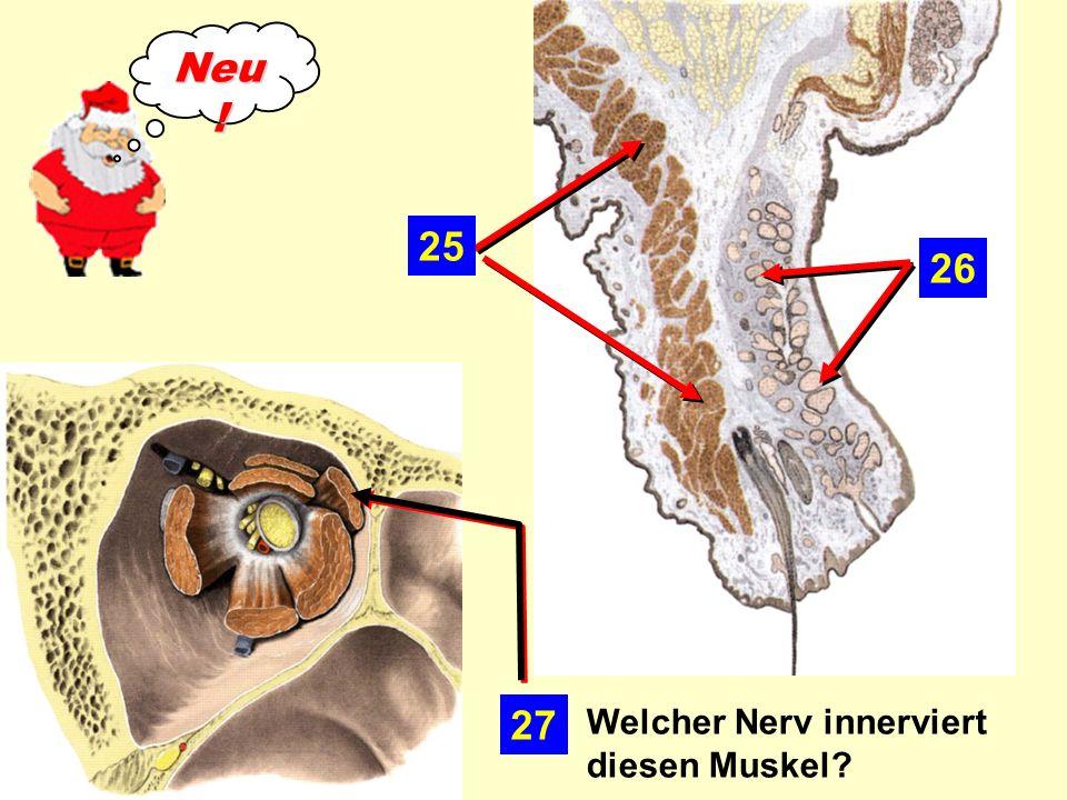 26 25 27 Welcher Nerv innerviert diesen Muskel? Neu !
