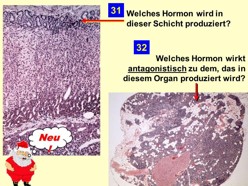 Welches Hormon wird in dieser Schicht produziert.