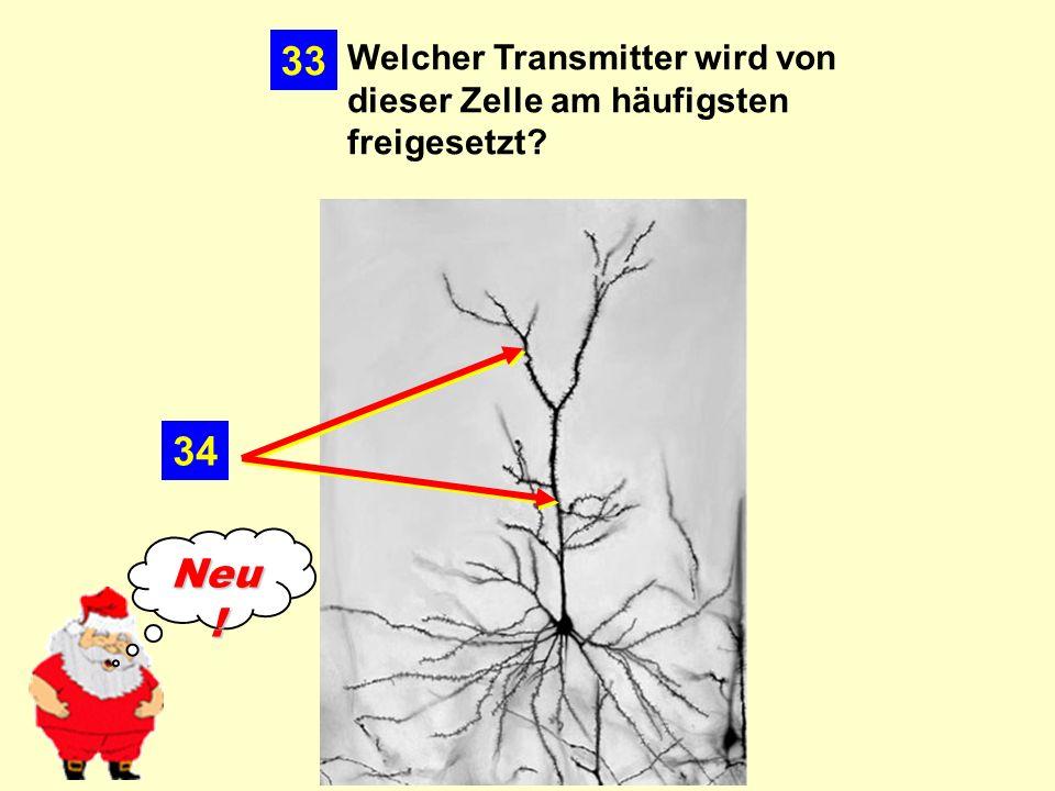 34 Welcher Transmitter wird von dieser Zelle am häufigsten freigesetzt? 33 Neu !