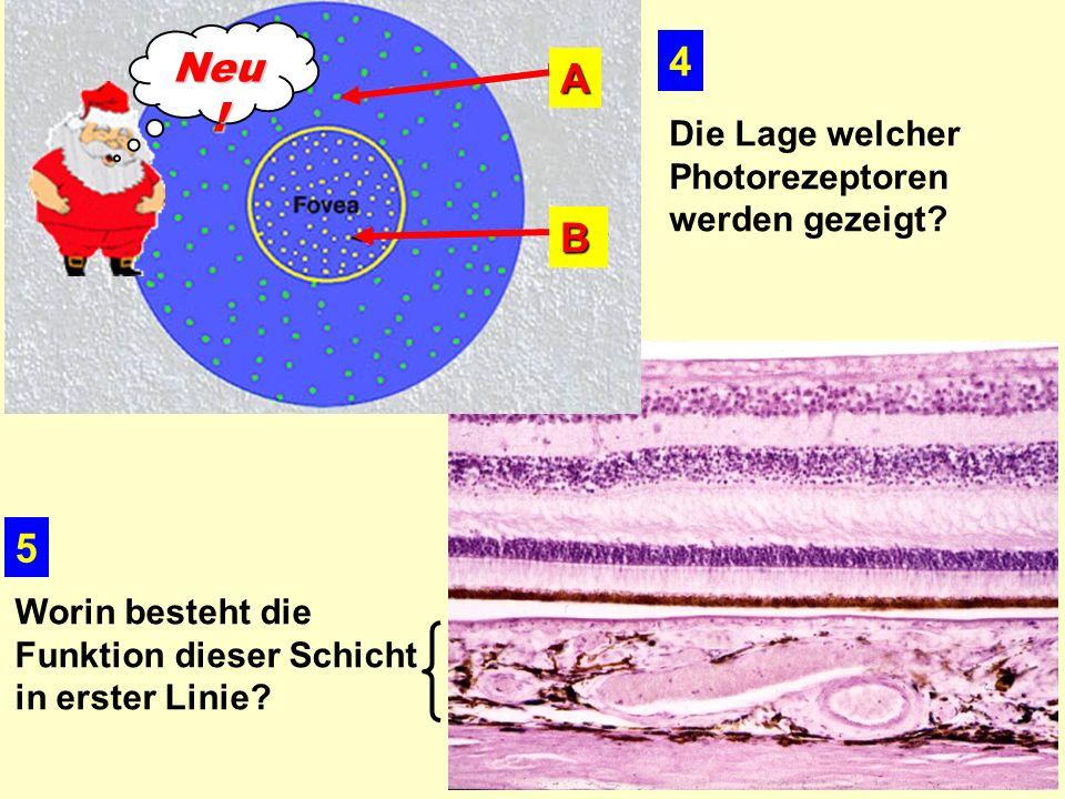 4 5 Die Lage welcher Photorezeptoren werden gezeigt.