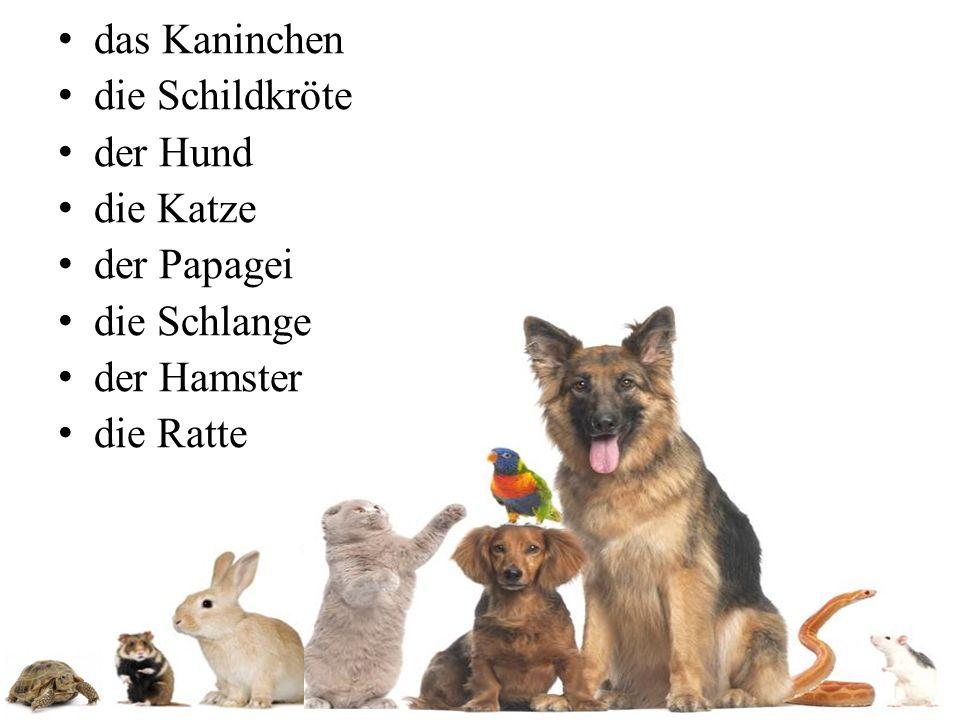 das Kaninchen die Schildkröte der Hund die Katze der Papagei die Schlange der Hamster die Ratte