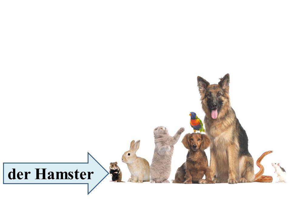 der Hamster
