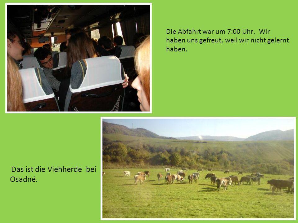 Die Abfahrt war um 7:00 Uhr. Wir haben uns gefreut, weil wir nicht gelernt haben. Das ist die Viehherde bei Osadné.