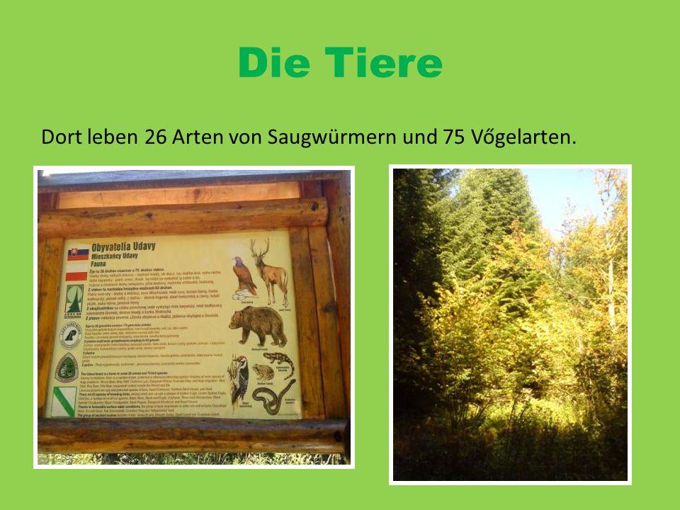 Die Tiere Dort leben 26 Arten von Saugwürmern und 75 Vőgelarten.