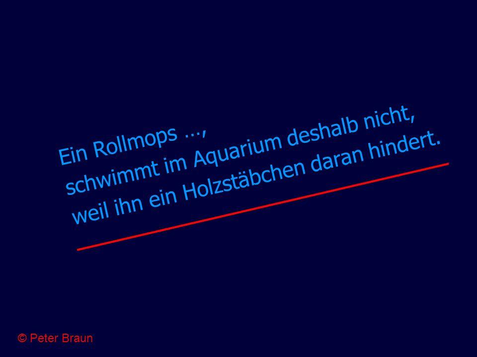 Ein Rollmops …, schwimmt im Aquarium deshalb nicht, weil ihn ein Holzstäbchen daran hindert. © Peter Braun