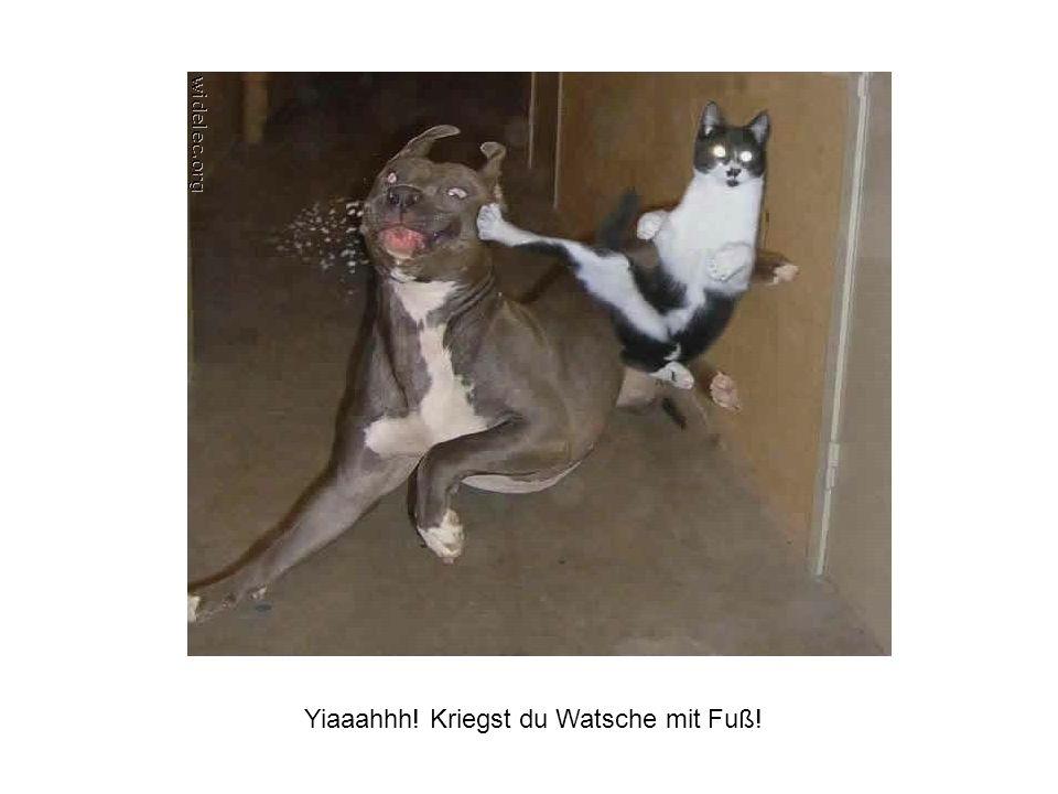 Yiaaahhh! Kriegst du Watsche mit Fuß!