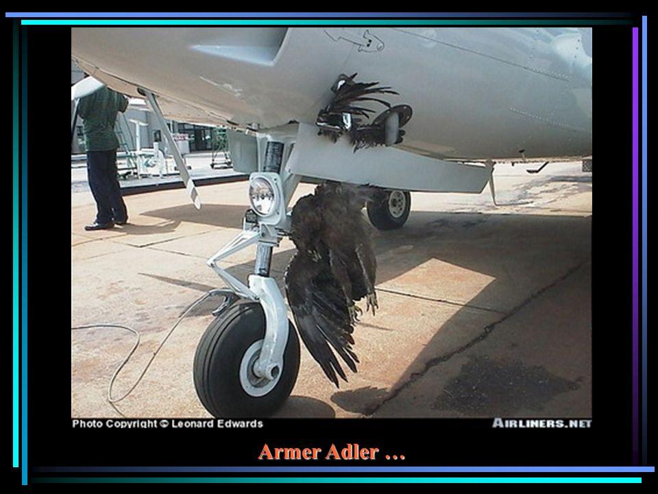 Armer Adler …