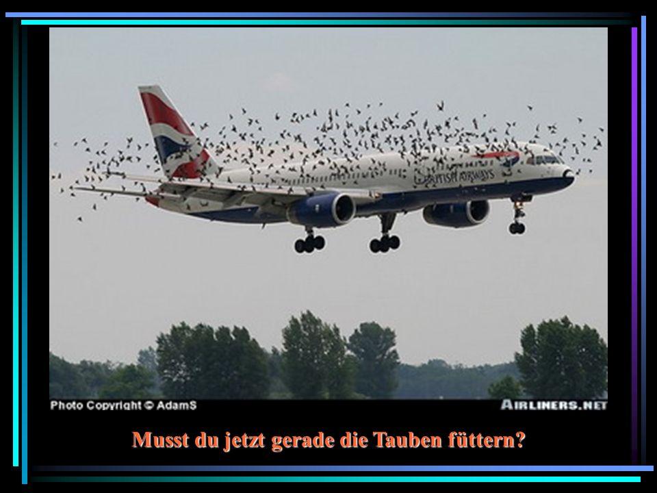 Musst du jetzt gerade die Tauben füttern?