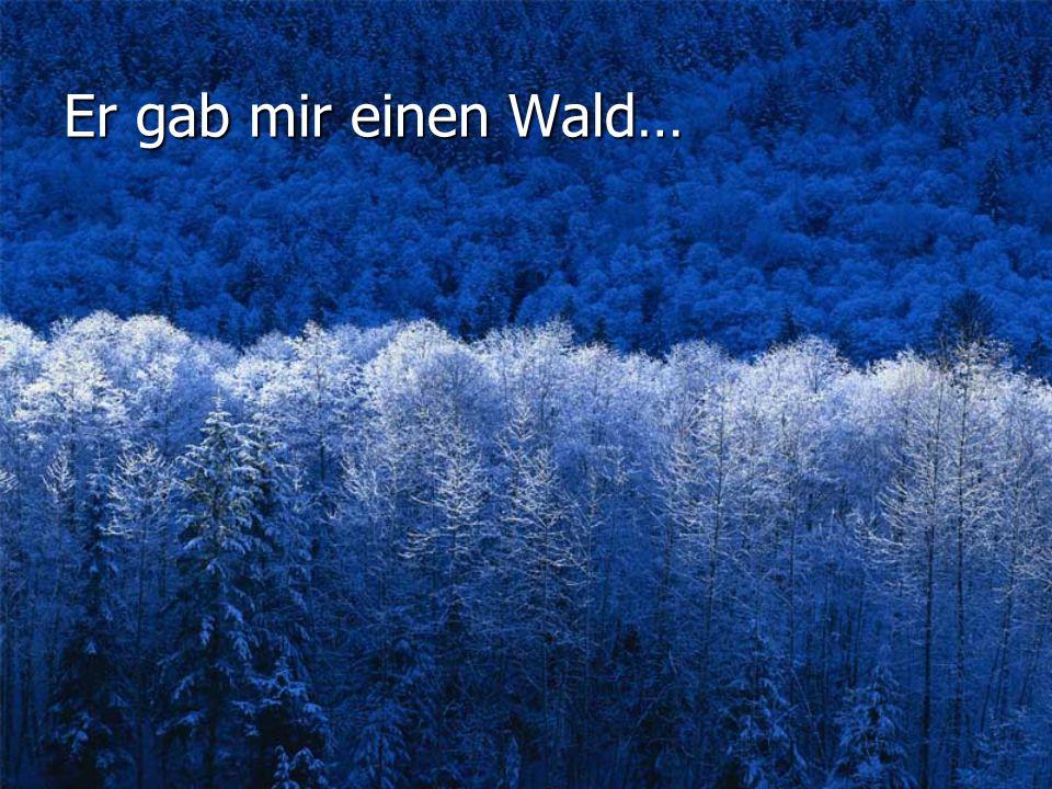 Er gab mir einen Wald…