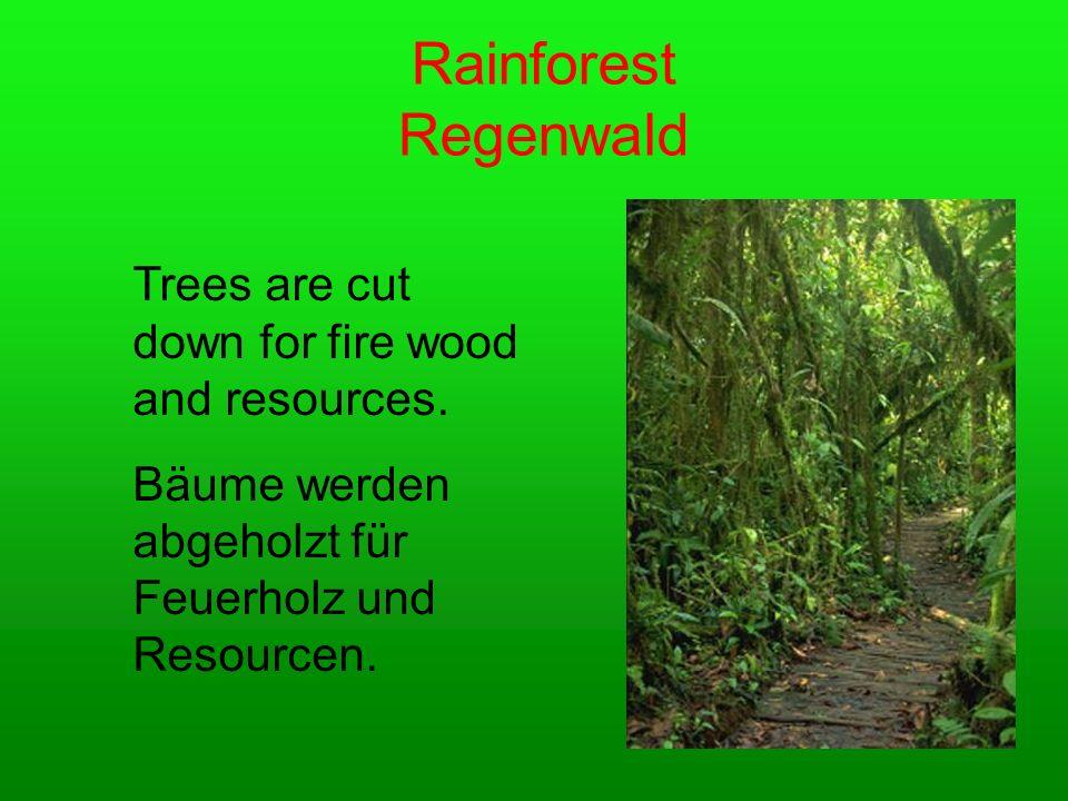Regenwald Rainforest